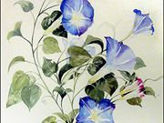 A09COMMENDED Lynne Mallard - Morning Glory.