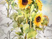 A10Commended, Allotment Sunflowers - Juliet Jones