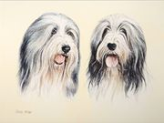 A12COMMENDED - 'Bearded Collies' by Chris Miller