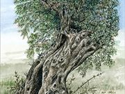 a17GEORGE CALEY AWARD (runner-up) 'Ancient  Olive Tree' by Mike Harrison