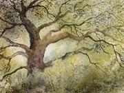 S16COMMENDED - 'Ancient Oak, Lyme Park' by Doreen Dutton