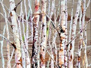 S16OONA LOWSBY TROPHY (W) - 'Silver Birches' by Veronica McDermott